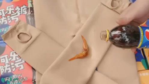光腿神器倒上可乐养小金鱼,这又是什么操作?