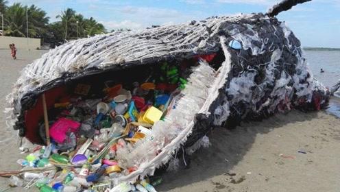 为什么鲸鱼会拼命游向海滩?把尸体解剖后,结果让人傻眼!