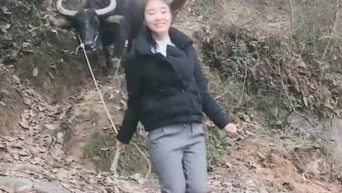 能做农活!能放牛!