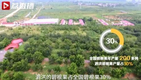 碧根果再不靠进口!全国近三分之一碧根果产自江苏泗洪|黄金时间