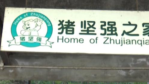 """中国最出名的一只猪,12岁""""高龄""""牵动众人心,胜却万千网红!"""