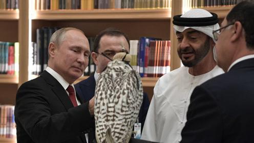 普京访阿联酋又送猎鹰 俄媒:这只鹰的表现胜过赠送给沙特那只