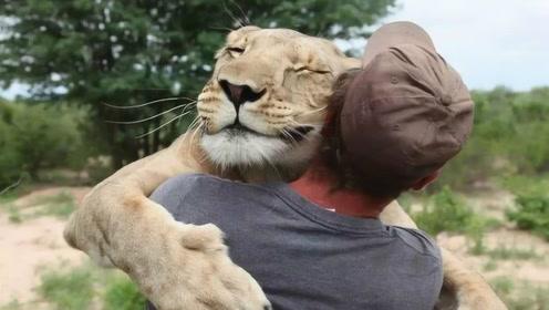 """被抛弃的小狮子,幸运的遇到了俩小伙,如今被宠成了""""小公主"""""""