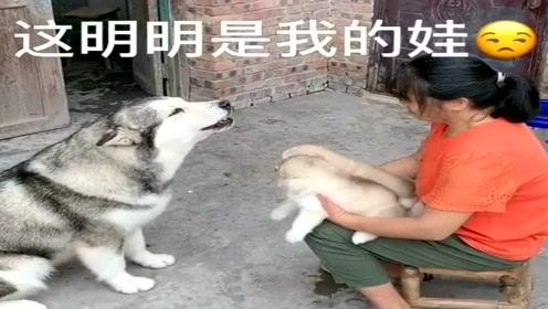 二哈和奶奶唠嗑,奶奶一句狗狗一句,完全没障碍!