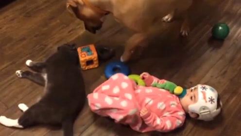 小宝宝踹了猫咪一脚,猫却以为是狗狗干的,上去就是一顿暴揍