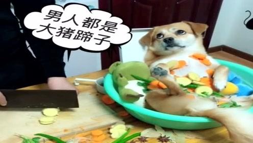 葱姜蒜已备齐,狗子也准备就绪,该起锅烧油了!