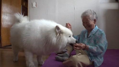 韩国90岁的老奶奶,和3岁萨摩耶的故事,看的网友怒锤自家狗头