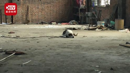 现实版忠犬八公:河南一市场搬迁 狗狗在原来的家苦等主人
