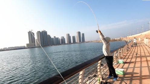 海钓小鱼闹窝,渔夫挖来160元一斤的神饵,效果出奇的好
