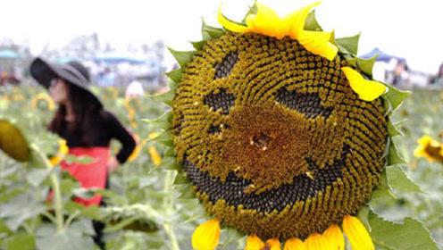 热图点评丨景区向日葵被游客抠成表情包,网友叹游人素质堪忧