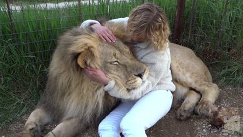 姑娘作死跟一头狮子拥抱,接下来的画面堪称霸气!