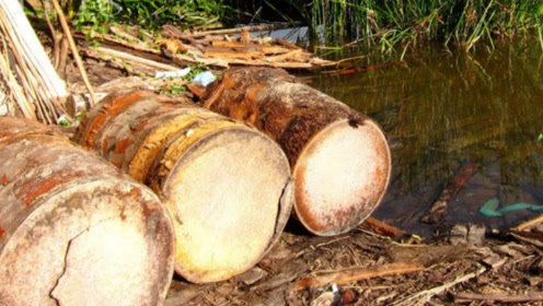 世界上最奇葩的椰树,不结椰果却产出大米,数百万人靠它来养活