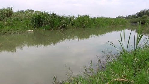 跑40公里野河钓鱼,一天就钓了10条,值得吗?