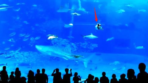 水族馆中,一条鱼试图袭击游客,却一头把自己撞死了?