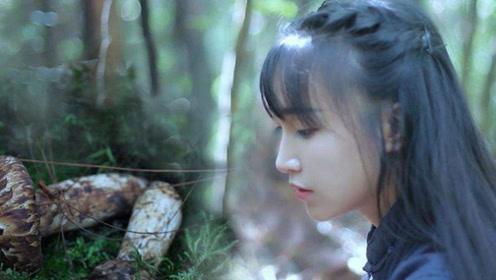 网红李子柒何许人也,为啥2000万人羡慕她的生活,了解后我沉默了