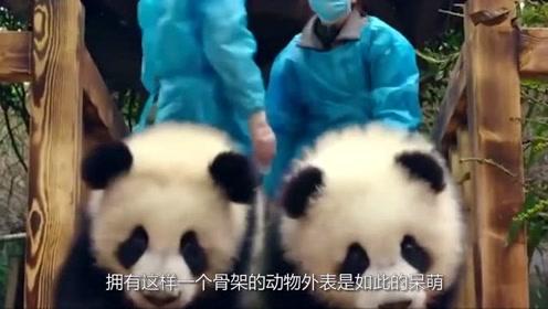 三种动物死后的骨架,大熊猫完全颠覆三观,最后一种意想不到