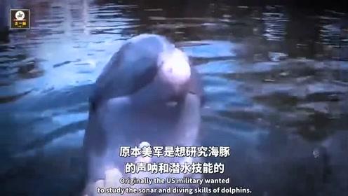 6只海豚帮助美军灭50名敌军?厌倦严酷训练,不忍同伴死亡叛变