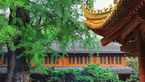 世界上最孤独的树,全球各地仅一棵,只能在中国生长!