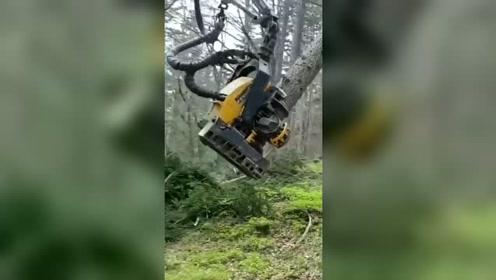 战斗民族,俄罗斯林场里强悍的伐木机械!