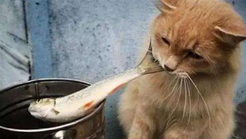 为啥猫吃鱼不怕鱼刺?镜头放慢后得出结论,专家:结构不同!