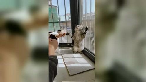 白猫:算了,不要跟傻子玩了,影响智商