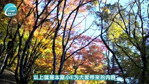 """中国最美的赏枫公路,被称为""""中华赏枫第一路"""",就在辽宁"""