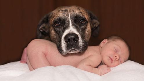宝宝出生后,容易受到家里猫狗的攻击,家长掌握3个原则提前预防