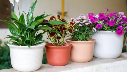 花盆里面撒一把,不管多蔫多难活的花,几天根壮叶绿爆满盆