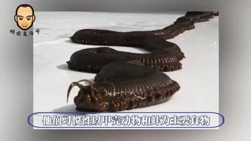 南极巨虫是什么?长达3米的巨虫,钻进海豹体内进食,太可怕