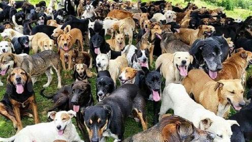英国夫妻豪花20万买下一座山,只为收养流浪狗,场面十分壮观!