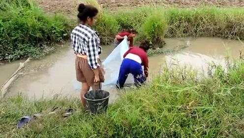 柬埔寨农村捕鱼,随便一捞就有鱼,两网收工!