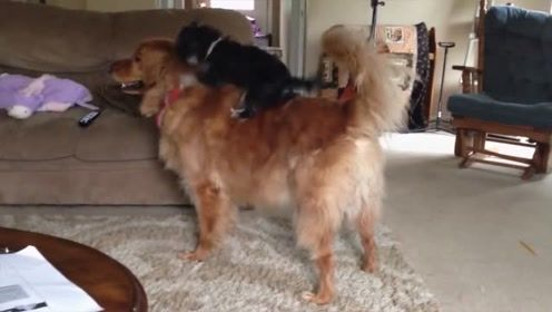 汪星人:熊孩子,你可真是嚣张呢!都快骑到我的头上来了!