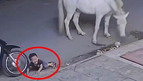 男孩贪玩欺负白马,不料马蹄向后一蹬,意外发生了!