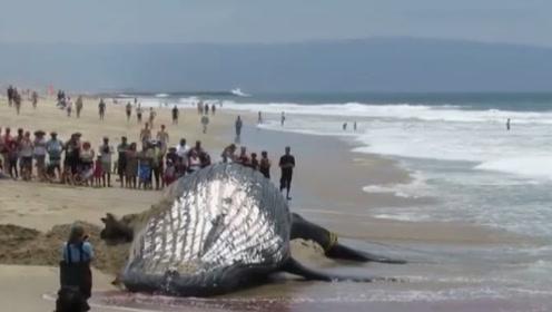 """男子海边捡到""""大鱼"""",竟是被撑死的,解剖后让人类汗颜!"""