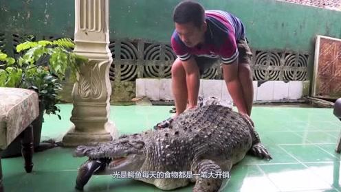 """国外""""硬核""""男子,400磅的鳄鱼养在下水道,每天吃15条活鱼"""