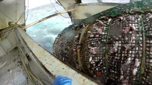 太厉害了,远洋捕渔船的一次收网,这渔获太牛了吧