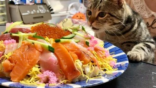 趣味萌宠:小猫咪等主人做美味早餐