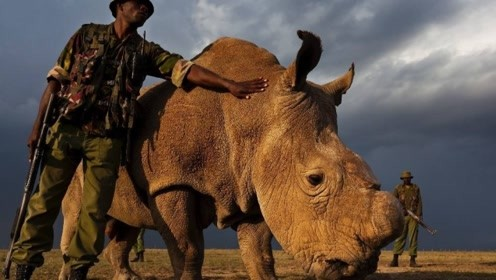 全球最珍贵的动物,世界仅存1只,特种兵24小时持枪保护