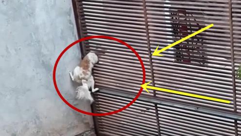 这狗子是有缩骨功么?当看到他成功逃跑的时候,简直难以置信!