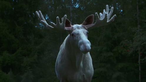 稀奇!神农架红外相机拍到罕见生物,网友:这是新物种?