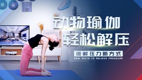 三个动物瑜伽体式,每天十分钟,轻松解压!