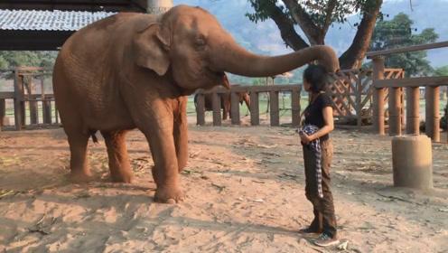 大象想念饲养员,直接用鼻子将女子拥入怀中,场面感人