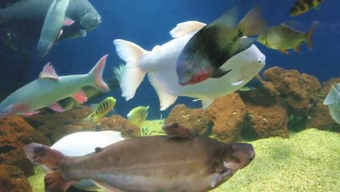 亲戚家混养了一大缸野生宝贝鱼,站在旁边静静欣赏,那感觉真爽!