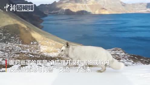 """吉林民警天池边巡逻偶遇""""雪山飞狐"""""""
