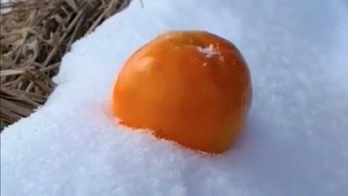 这才是真正的东北冻柿子,用刀切开的那一刻,未免也太馋人了