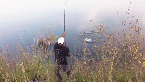 水库边任意抛一竿,结果大野货立马就来吃钩了,赶紧收杆抓鱼!
