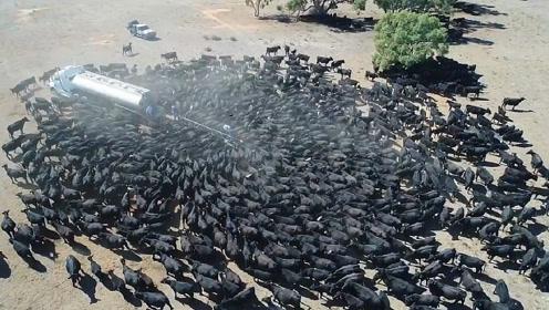 草原正经历干旱,送水车被野牛群围得水泄不通,感人的事情发生了