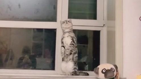喵:我想扒拉它,但是看看自己的身高,还是算了吧,我不配!