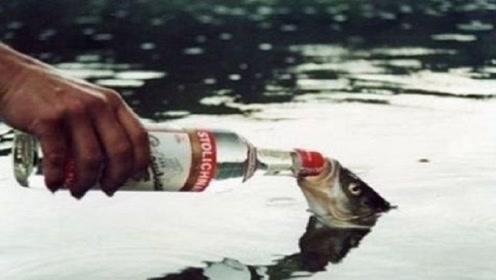 男子在船上喝酒,扭头发现一条鱼张着嘴,给鱼喝点后不得了