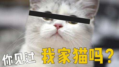 养了九只猫供大家云吸,结果粉丝说自己脸盲完全分不清?